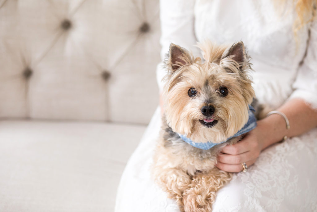 Louella Reese Little Nest Portraits Review // Family Photos with Your Dog