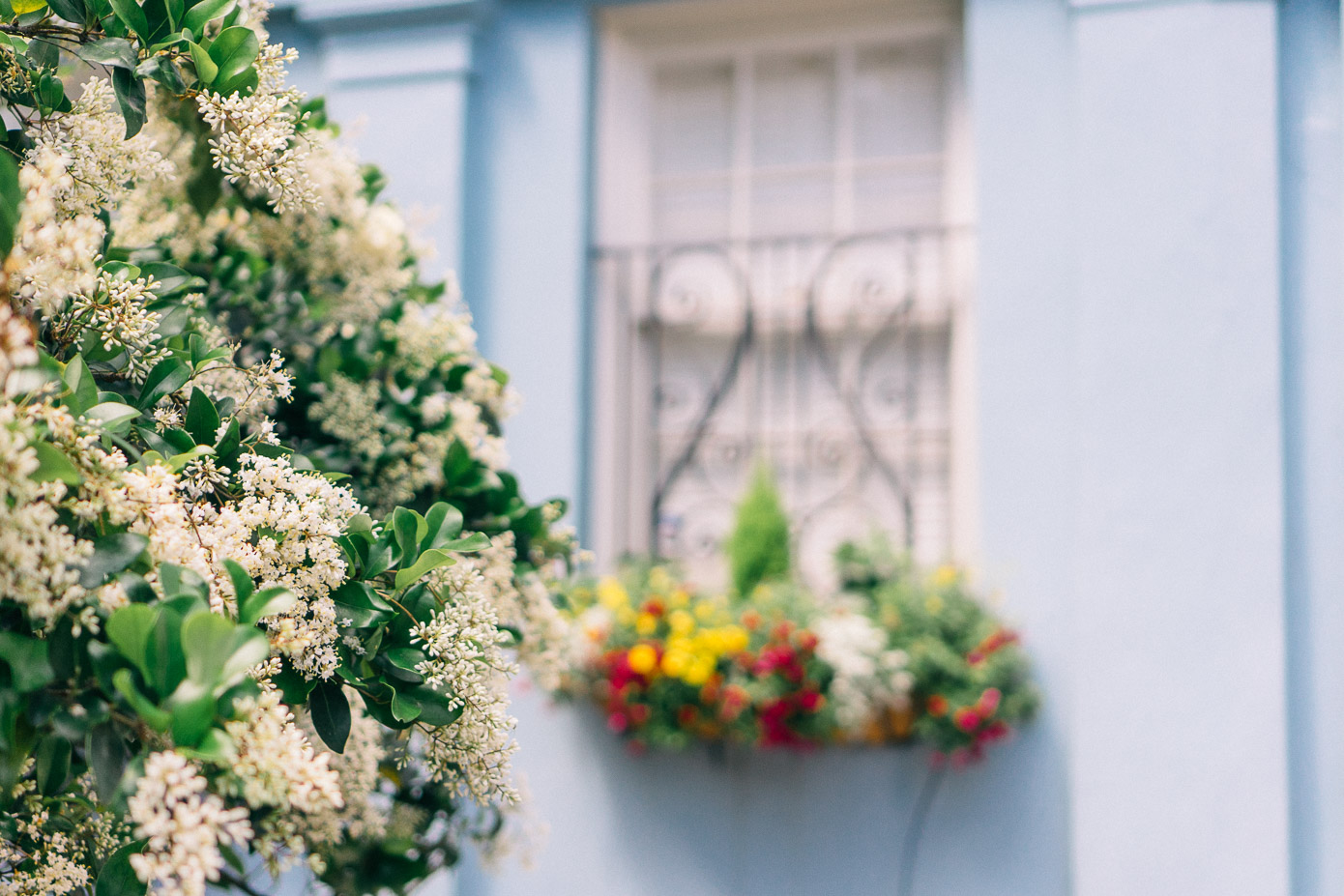 Charleston Window Boxes | Explore Charleston | Louella Reese Life & Style Blog