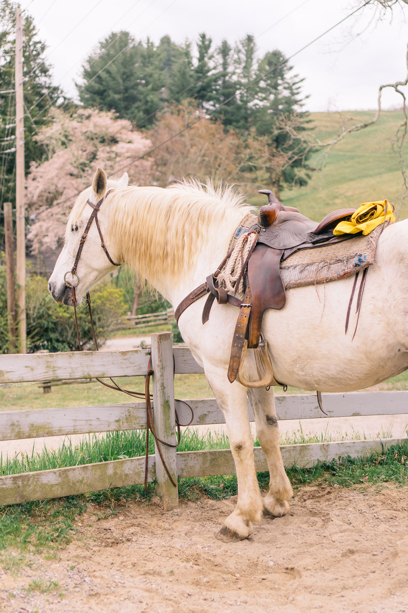 Cataloochee Ranch Maggie Valley NC | Where to go Horseback Riding in the NC Mountains | Louella Reese Life & Style Blog