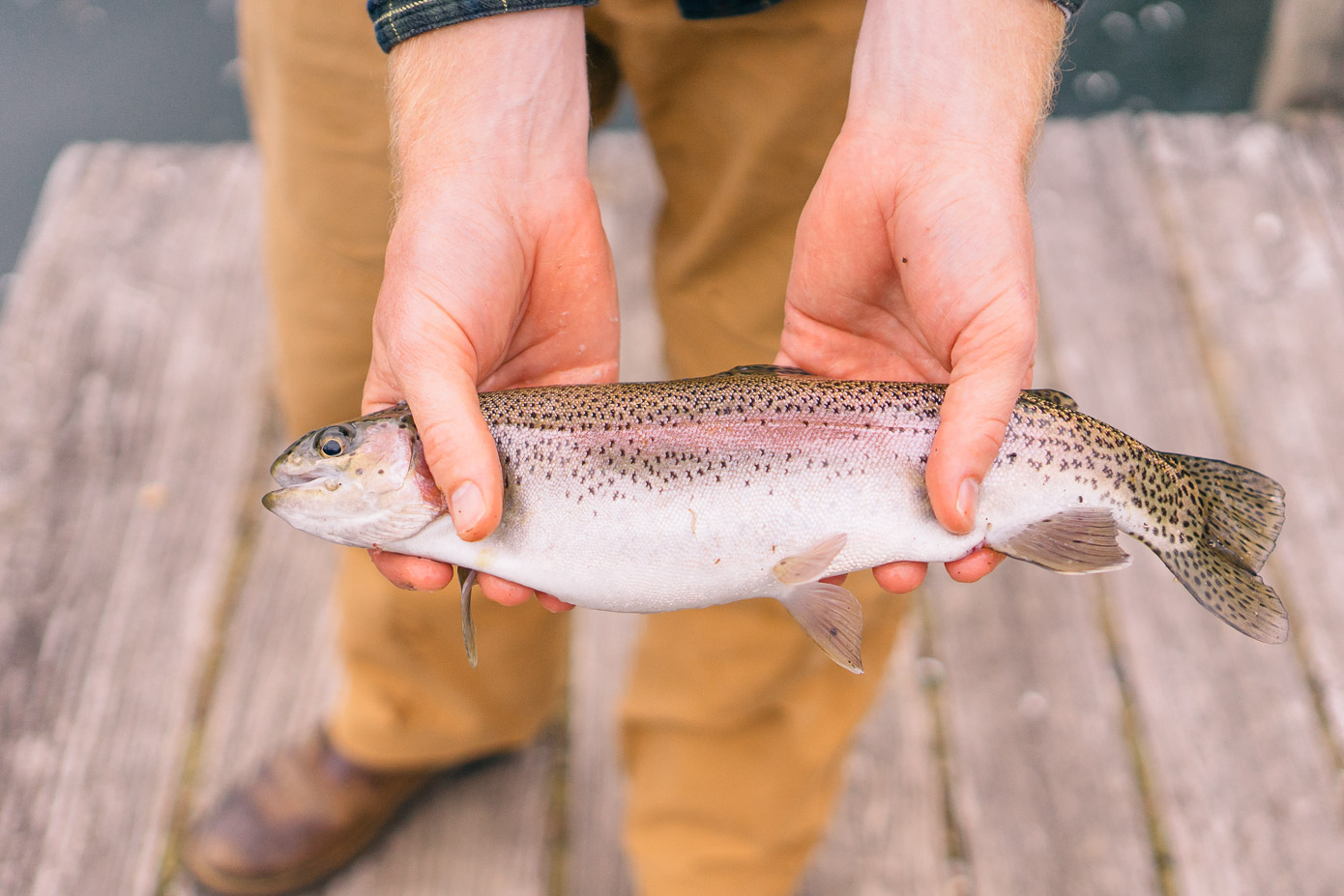 Cataloochee Ranch Review | Where to Go Fishing in NC Mountains | Louella Reese Life & Style Blog