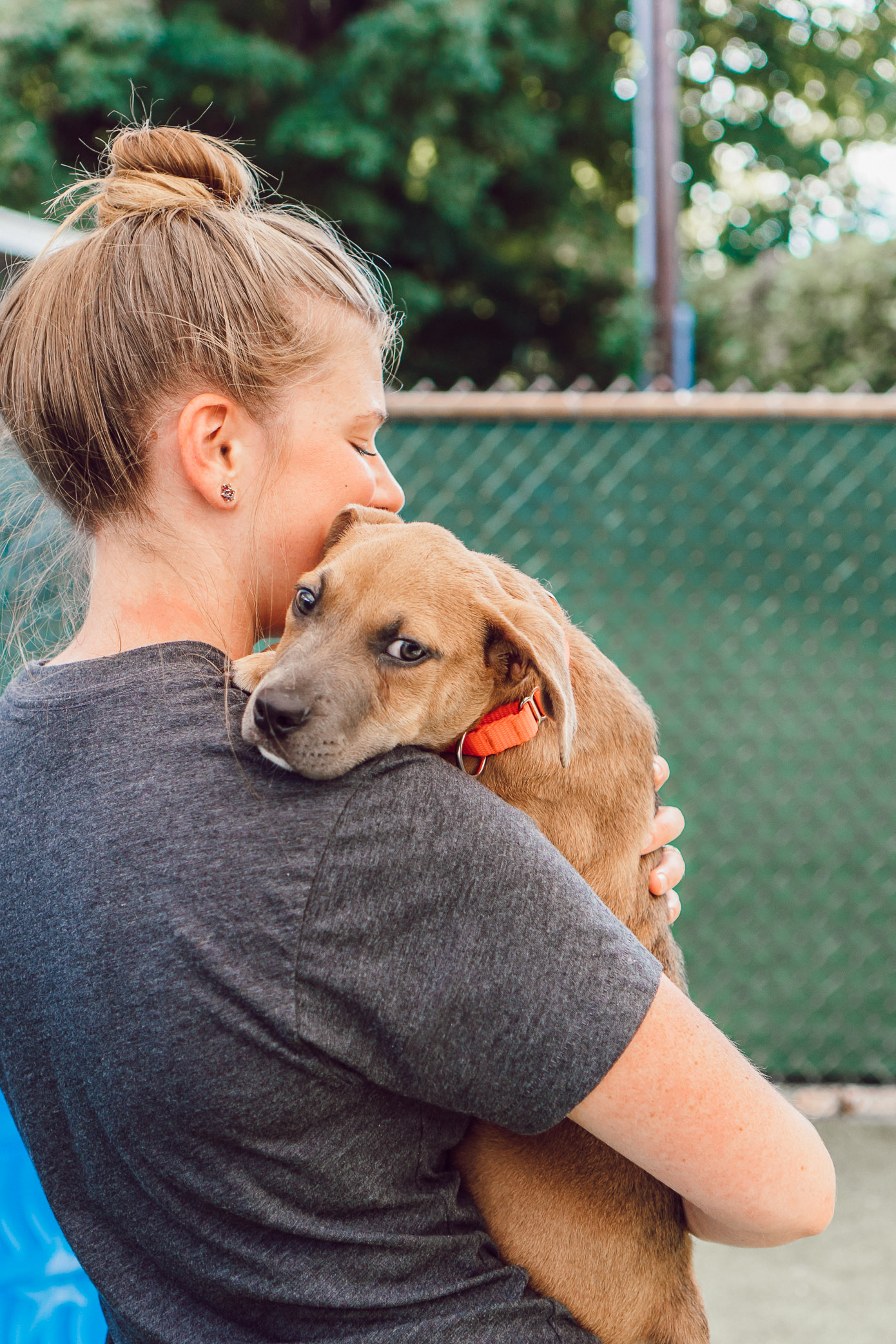 Puppies Available for Adoption in Charlotte NC | The Humane Society Charlotte featured on Louella Reese Blog