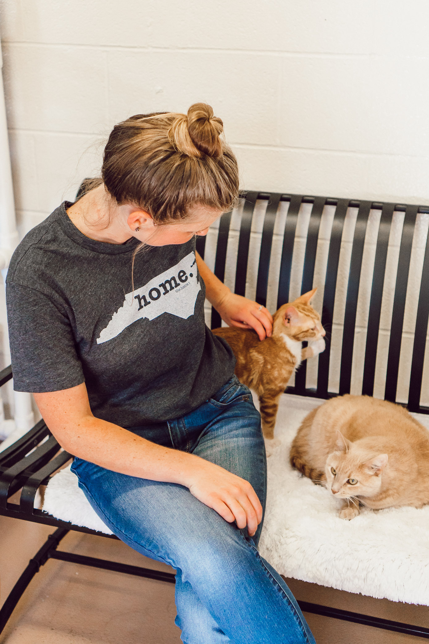 Adult Cats Available for Adoption in Charlotte NC | The Humane Society Charlotte featured on Louella Reese Blog