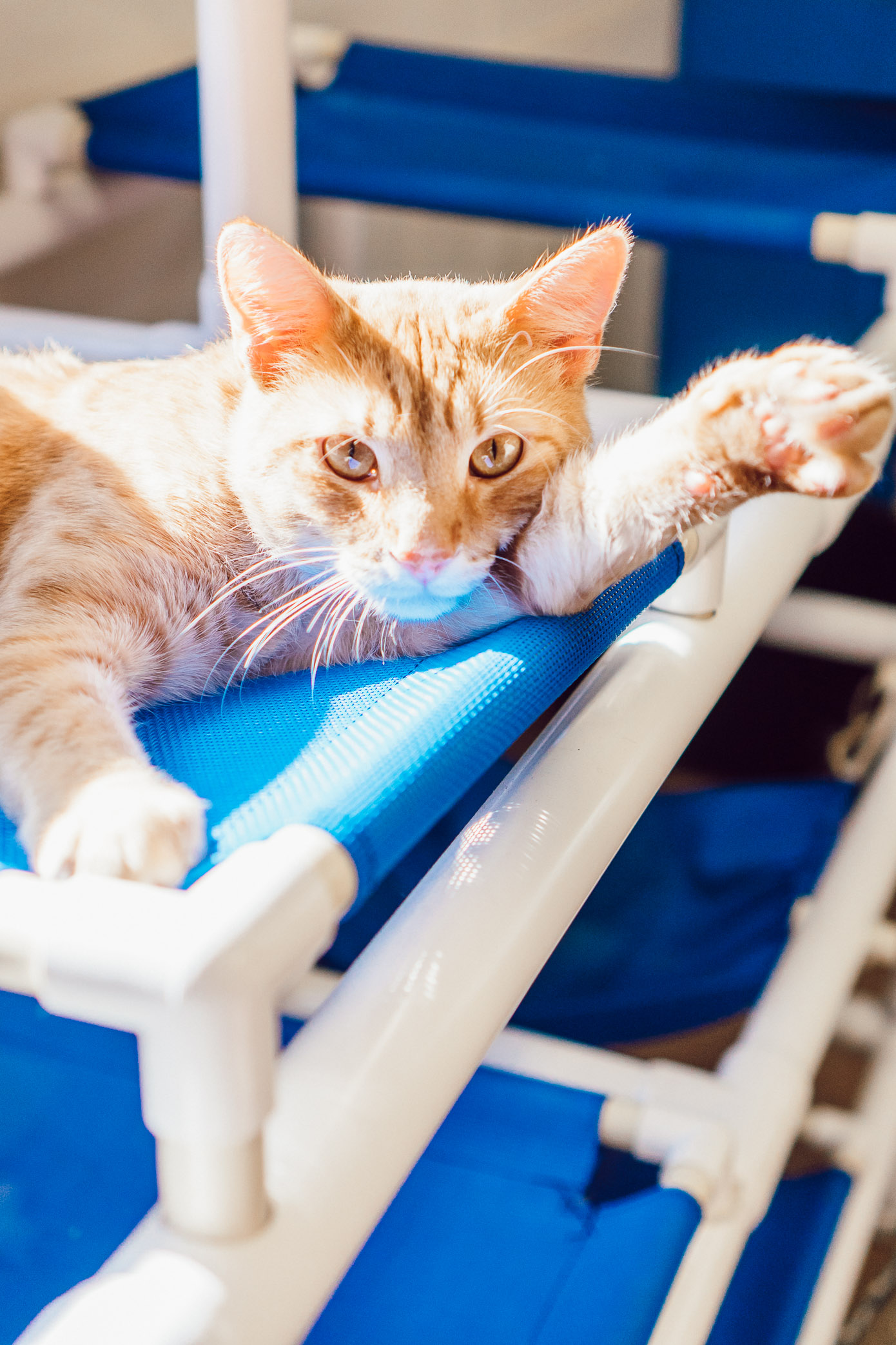 Adult Cats Available for Adoption in Charlotte NC | The Humane Society Charlotte featured on Louella Reese