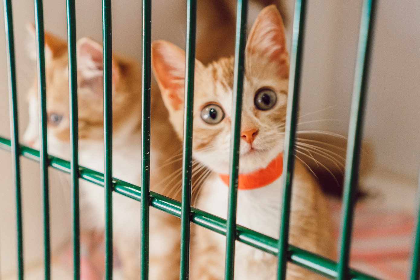 Kittens Available for Adoption in Charlotte NC | The Humane Society Charlotte featured on Louella Reese Life & Style Blog